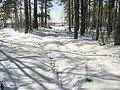 Снежное покрывало в лесу. Snow covered forest. - panoramio.jpg