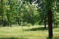 Центральный парк Белгорода 17.JPG