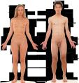 Человеческое тело.png