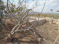 גן לאומי סבסטיה שומרון 036.jpg