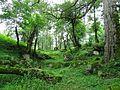 طبیعت زیبای جاده 3هزار - panoramio.jpg