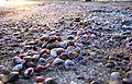 فرش صدفي - panoramio.jpg
