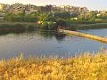 ناعورة الدهشة والجسر.jpg