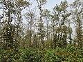 কাদিগড় জাতীয় উদ্যান ১.jpg