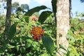 লাউয়াছড়া জাতীয় উদ্যান 04.jpg