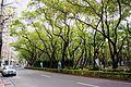仁愛路 Renai Avenue - panoramio.jpg