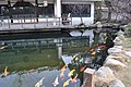 梦湖公园的锦鲤池 - panoramio.jpg