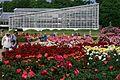 神代植物公園 ばら園 - panoramio (2).jpg