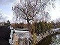 雪天的潍坊学院 2020-12-13 12.jpg