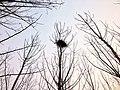 鳥巢 - panoramio (5).jpg