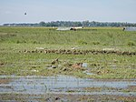 03306jfBirds Sanctuary Ducks Wetland Marshes Rice Fields Candaba Pampangafvf 19.JPG