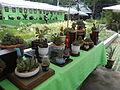 05704jfMidyear Orchid Plants Shows Quezon Cityfvf 07.JPG