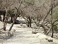 2011-08 En Gedi David river 01.jpg