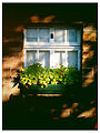 2011 windowbox Chatsworth England 6251035385.jpg