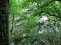 20140526 NSG-Nr 2-096 Enztal Niefern-Mühlackerl 041.jpg