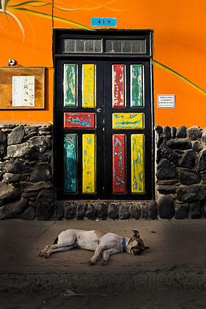 Sal, Cape Verde - Image: 2014 Cape Verde. Sal. Hund Vid Färgad Dörr