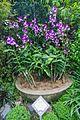 2016 Singapur, Ogrody botaniczne (359).jpg