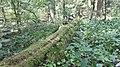 20200728 133205 Hajnówka Białowieża Forest.jpg