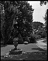 22.06.1964. Vue de la propriété. (1964) - 53Fi4702.jpg