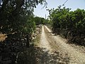 23-06-2017 Way-marker on a section of Footpath GR13.JPG