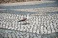 2450 Nazaré, Portugal - panoramio.jpg