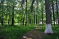 46-215-5006 Livchytsi Park RB.jpg