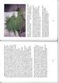 46-47 . side i boken Svedjebruk ISBN 978-82-93036-00-5,.pdf