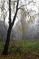 74-104-5004 Grafsky park SAM 0491.jpg