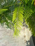 A-tree-in-kish-island leaves.jpg