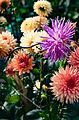 ADD SOME COLOUR TO YOUR LIFE (FLOWERS IN A PUBLIC PARK)-120114 (29194461691).jpg