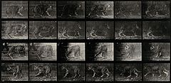A leopard walking. Photogravure after Eadweard Muybridge, 18 Wellcome V0048774.jpg