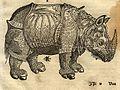 A rhinoceros (1550).jpg