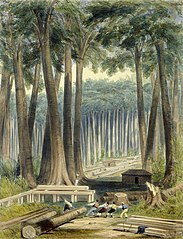 A sawyer's clearing in a forest of kauri (commonly called cowdie) trees on the banks of the Kaipara River. Day & Haghe. London, Smith, Elder [1845]