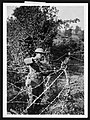 A soldier wearing his uniform, a tin helmet and a few bits of equipment is standing in the middle of a criss-cross of barbed wire. He is holding a huge spiral of it up in front of him and is winding (2958749332).jpg