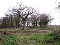A tree marks the spot - geograph.org.uk - 1117160.jpg