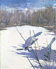 Blue Jays in Winter, study for book Concealing Coloration in the Animal Kingdom