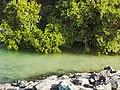 Abu Dhabi Mangroves.jpg