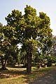 Acharya Jagadish Chandra Bose Indian Botanic Garden - Howrah 2011-01-08 9798.JPG
