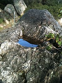 This pit in the surface of a rock at Indian Rock Park is typical of those used by Ohlone Indians to grind acorns. Acorn pit at Indian Rock.jpg