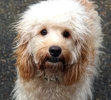 Dog Grooming Park City Utah