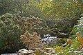 Afon Cenllusg - geograph.org.uk - 1483573.jpg
