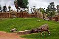 Africa en Valencia V - Bioparc (2788036578).jpg
