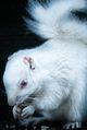 Albino Returns.jpg