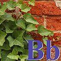 Alfabet roślin - literka B.jpg