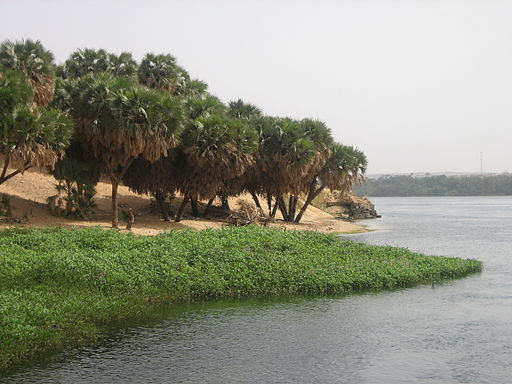 Along the Nile (2427866403)