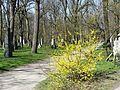 Alter Nördlicher Friedhof GO39.jpg