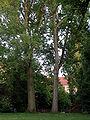 Althoffblock-Innenhof.JPG