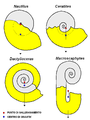 Ammonite buoyancy.PNG