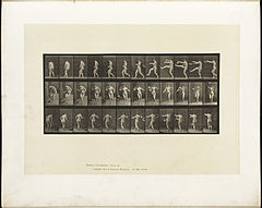 Animal locomotion. Plate 367 (Boston Public Library).jpg