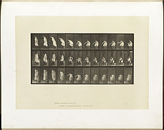 Animal locomotion. Plate 423 (Boston Public Library).jpg